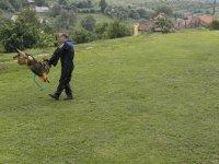 MDD 2013  v obci Vojkovce  ukážky práce psovodov