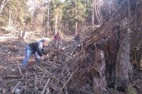 Brigáda urbariátu Vojkovce 11.04.2015 pri čistení porastu pred vysadbou stromcekov