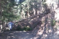 Odpratávanie dreva po veternej kalamite v urbariáte Vojkovce na sprejazdnenie lesných zvážnic